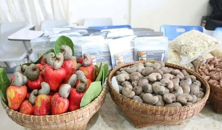 Cambodia exports over 204,000 tonnes of cashew nuts