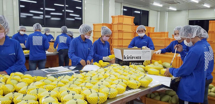 Registered mango exporters ready to get certified for China's markets