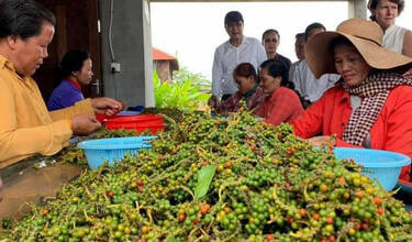 """Kampot Pepper"" gets international recognition in 32 countries"